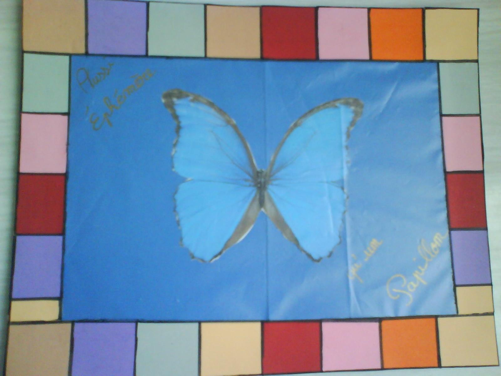 cardrepapierpapillon.jpg